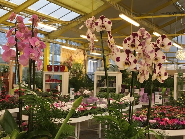 Orchideen-Tage im Gartencenter Amoflor